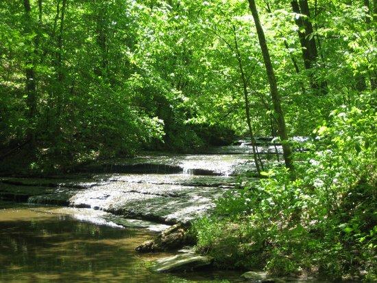 13. Henry Hollow Loop - 2 miles