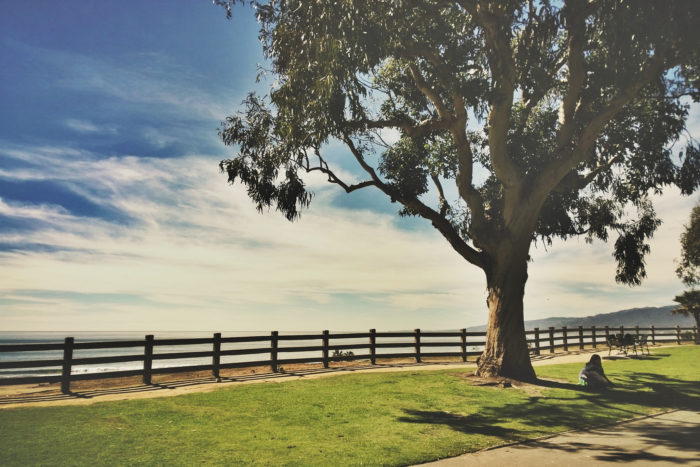 2. Find a perfect tree, like this one in Santa Monica, and take in the view of the water.
