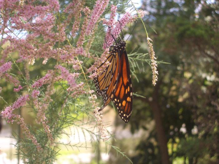 11. Franklin Park Zoo Butterfly Landing