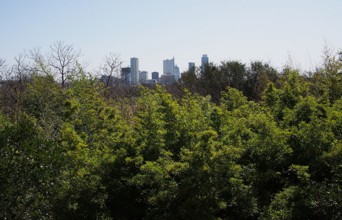 6. A less challenging hike, yet epic nonetheless...a climb up through the Zilker Botanical Gardens Japanese garden, grants you a unique view of the city.