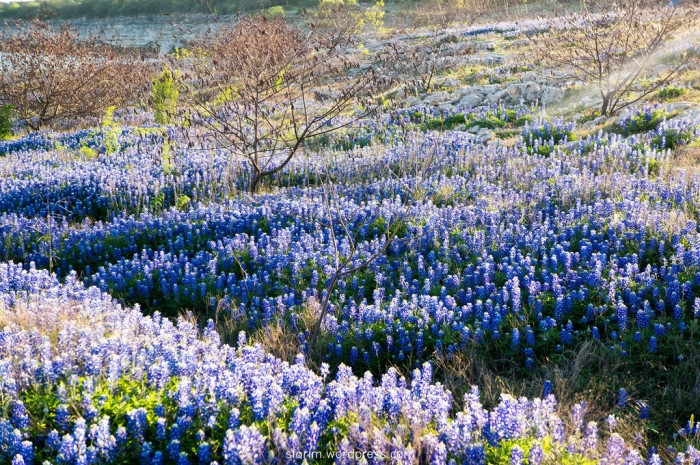 4. Take your famous Bluebonnet photos at Pace Bend Campgrounds.