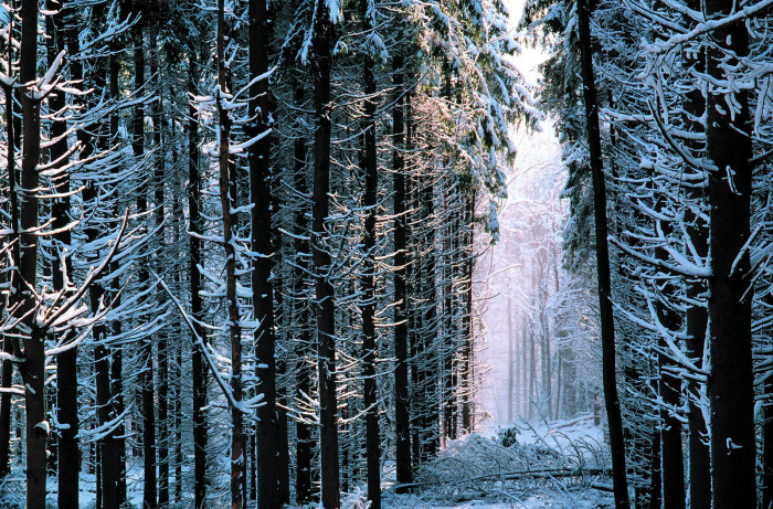 6. The snowy forests of Notchview in Windsor make for a magical hiking setting.