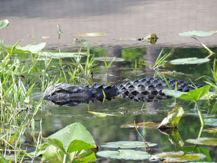 5. Okefenokee Swamp—5700 Okefenokee Swamp Park Rd, Waycross, GA 31503