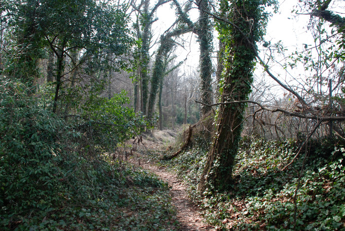 9. Vulcan Trail - 1 Mile