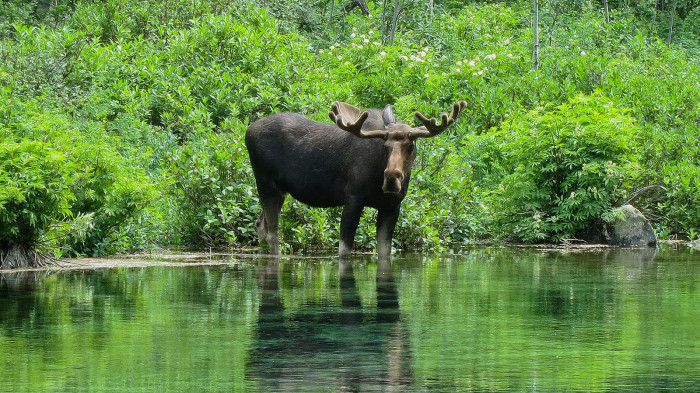 We've never seen a moose. Or a bear. But we sure love letting tourists worry about seeing them.
