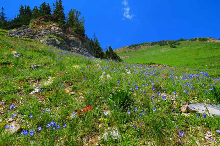 1. The mountains in the spring…