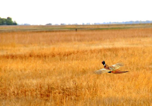12. Sand Lake National Wildlife Refuge