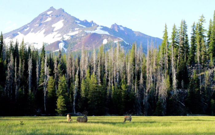 5. Three Sisters Wilderness