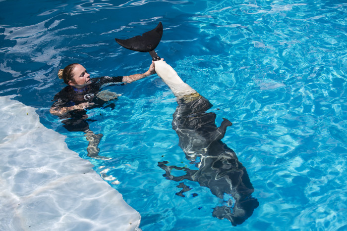 2. Clearwater Marine Aquarium - Dolphin Tale