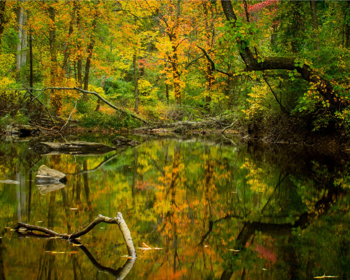 12. An otherworldly reflection of the changing seasons at Ridley Creek State Park.