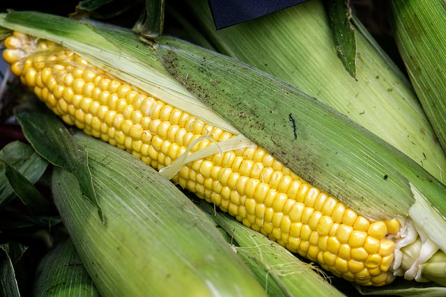 2. And we grow especially yummy sweet corn.
