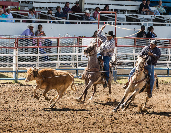 1. Arizona is home to the World's Oldest (professional) Rodeo, founded in Prescott in 1888.