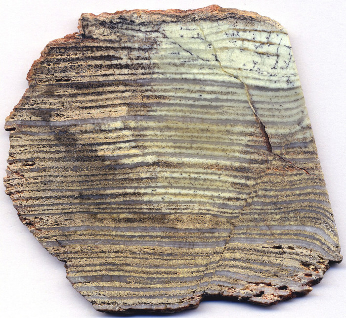 6. The oldest fossils found at the Grand Canyon? Stromatolites which are at least 740 million years old.