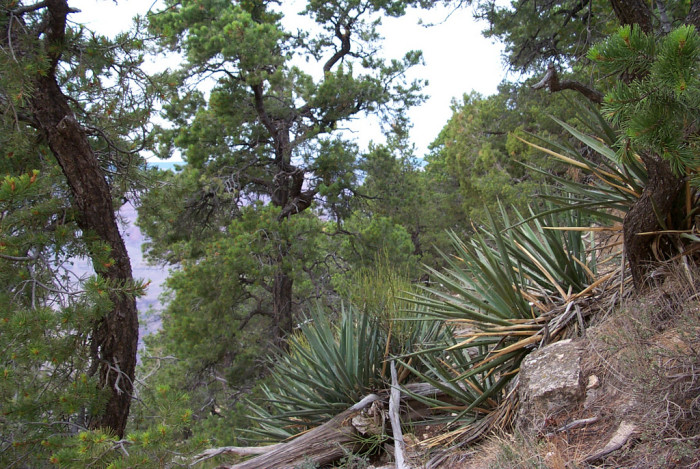 8. The Grand Canyon is home to a very diverse habitat and that includes about a dozen plants that exist only within the park.
