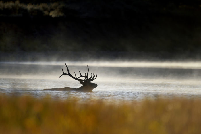 5. This is a rare glimpse of wildlife doing something a little out of the ordinary.