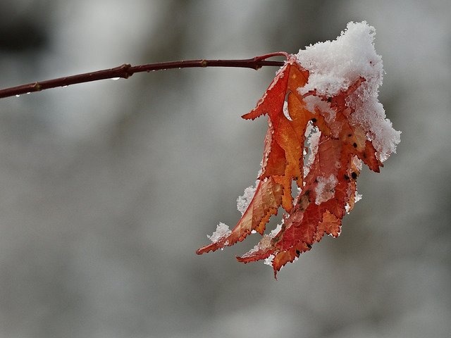 8. The seasons are not equal in length. Usually fall seems to fly by before winter begins.