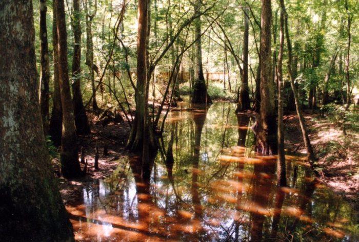 1. River Trail, Tickfaw State Park, Springfield, LA