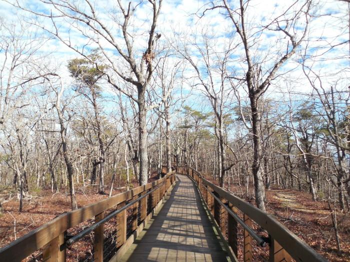 8. Cheaha State Park/Doug Ghee Trail - 1 Mile