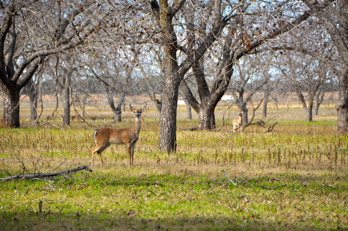13. Hang out with the animals at Lyndon B. Johnson State Park.