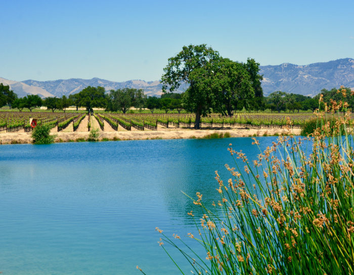 4. Wine tasting anyone? Santa Barbara is a great spot to sip and simple a little vino in the summer.