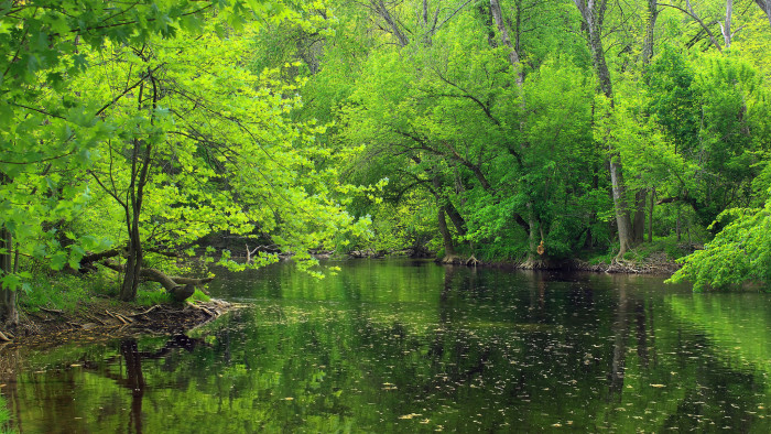 5. The greenest of greens reflected in the slow-flowing waters of Buffalo Creek.