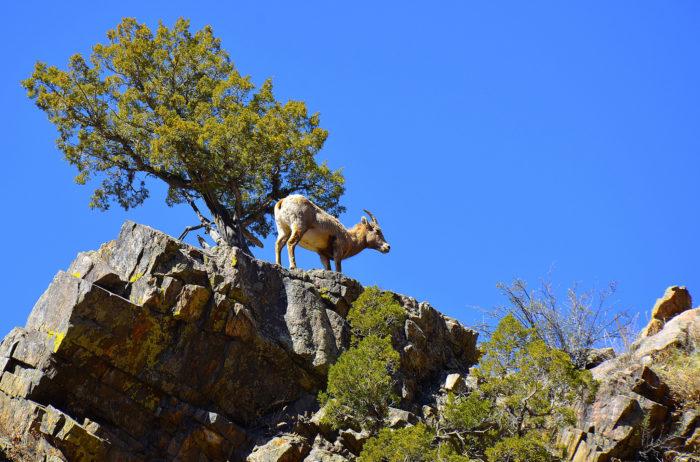 7. Waterton Canyon Trail