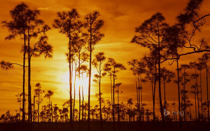 12. Everglades National Park, Florida