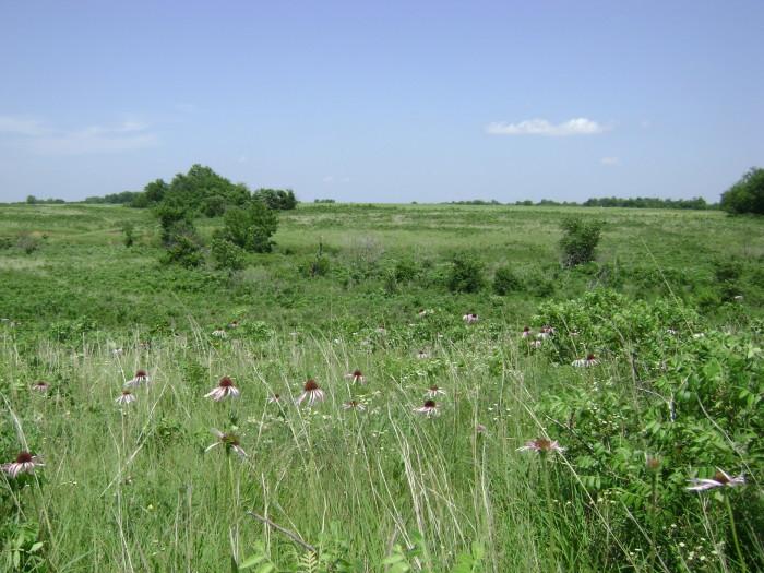 2.Drover's Trail, Prairie State Park