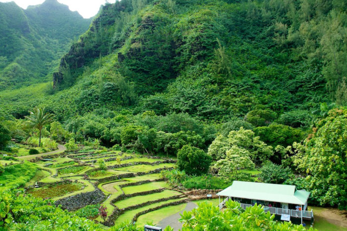 2. The film's prologue, where you see a park staff member falling prey to an unseen dino while being loaded into a container was shot at the Limahuli Garden, in Hanalei. The garden has been a part of the National Tropical Botanical Garden since 1976, and is open for tours.