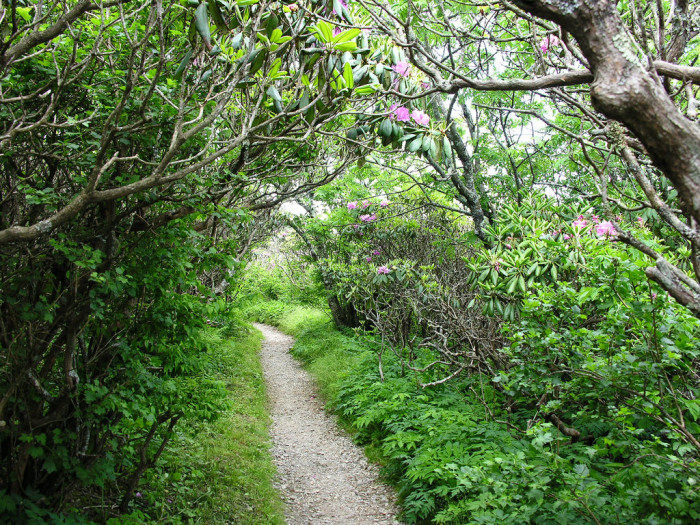 5. Feel like you're in a fairytale as you hike Craggy Pinnacle Trail at Craggy Gardens.