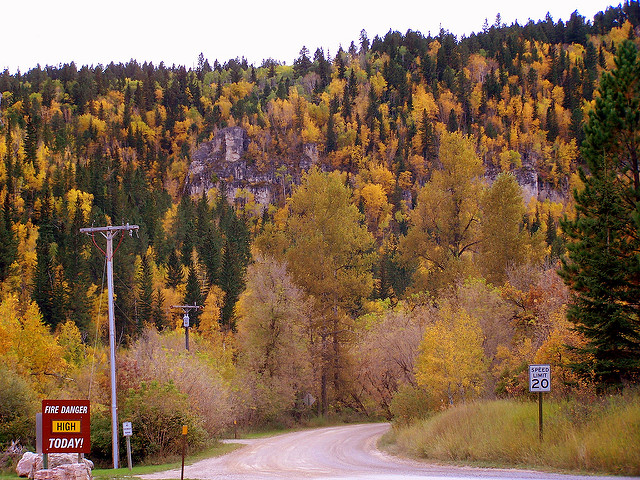 7. We take long autumn drives just to see the colors.