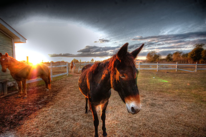 7. Owners of mules may not allow their animal to roam around Athens unsupervised.