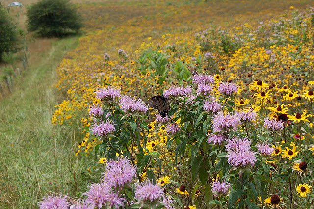 Start your Sunday off right by marveling at the wildflowers at Devils Den Nature Preserve.