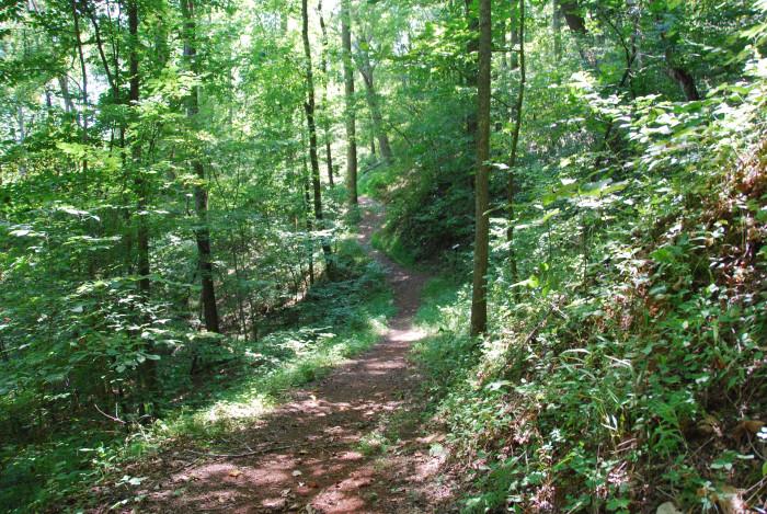 12. Stuarts Knob (5 miles)