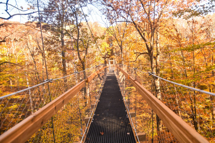 What a beautiful, unique way to take in the fall foliage during the autumn months.