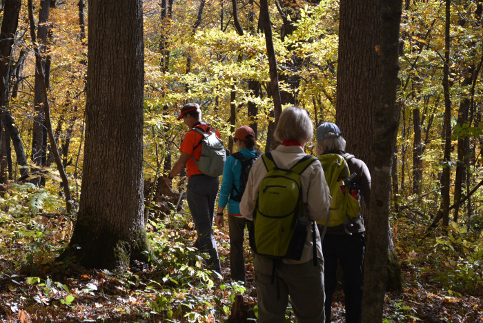 11. Yellow River State Forest, Allamakee County