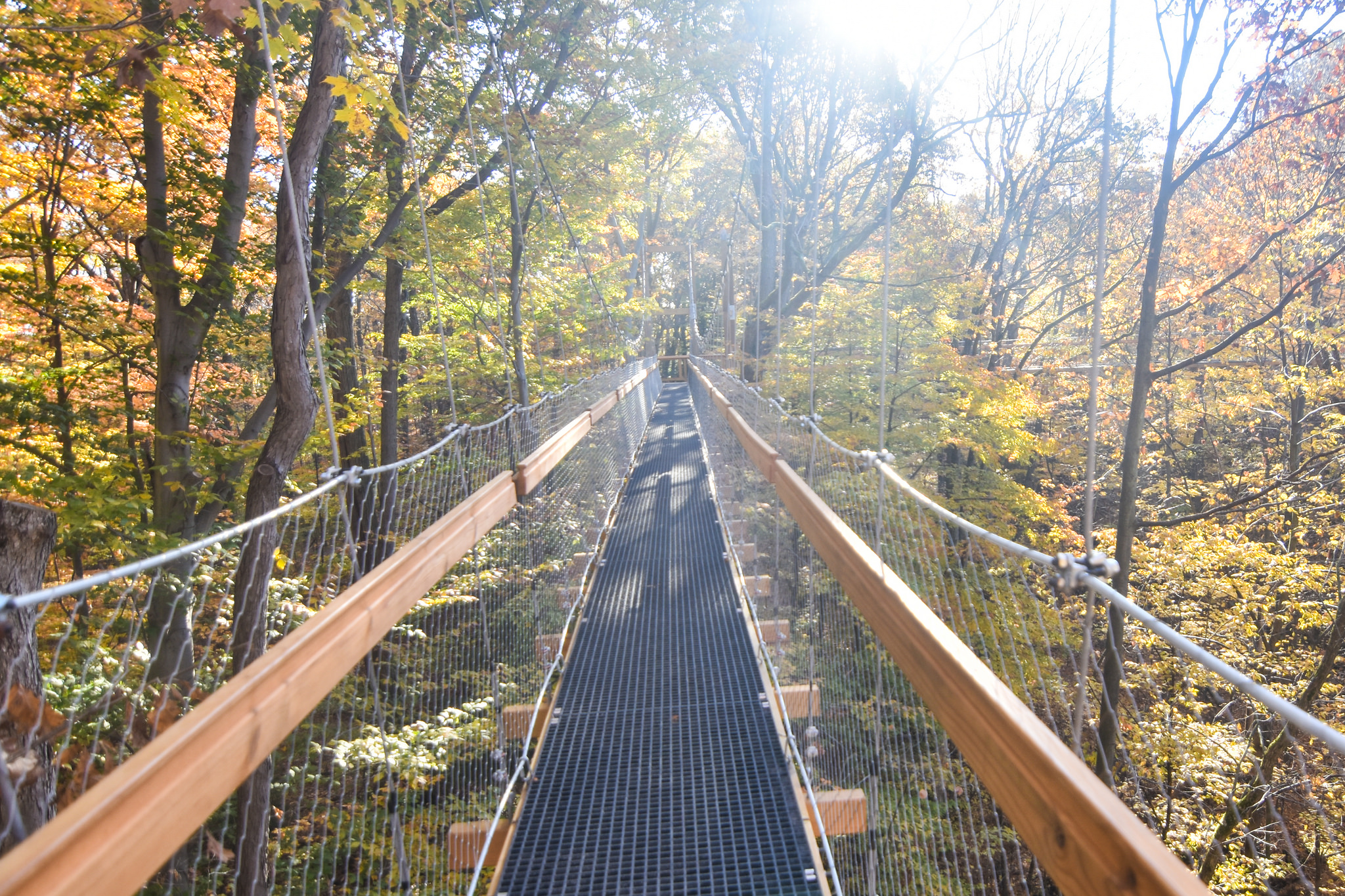 The Murch Canopy Walk At Holden Arboretum