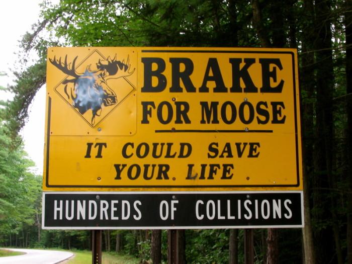 1. Moose