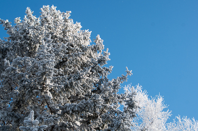 4. The frost and snow that winter brings are just another layer of stunning.
