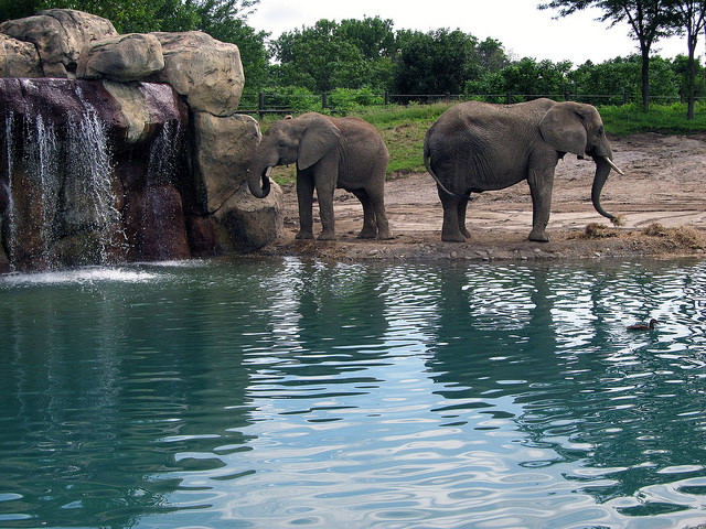 5. Or visit one of our famous zoos...