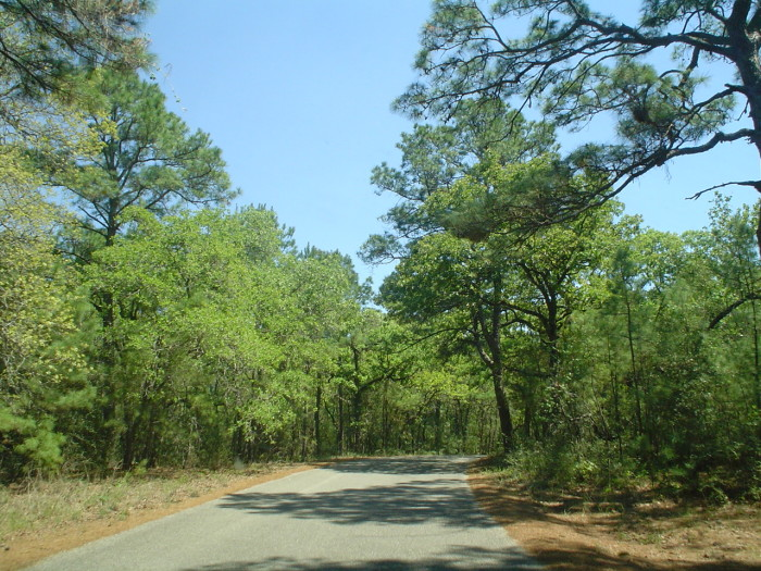7. Go on a bike ride or walk through the woods at Lakeview Campground.