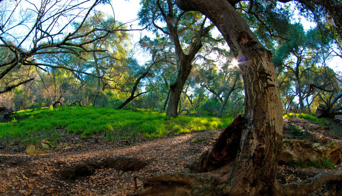 6. A woodsy walk in Covina forest will remind you just how much beauty there is to see and experience at every turn.