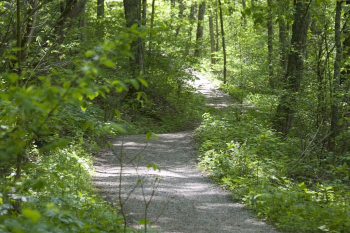 3. Rowe Woods Trails (Rowe Woods)