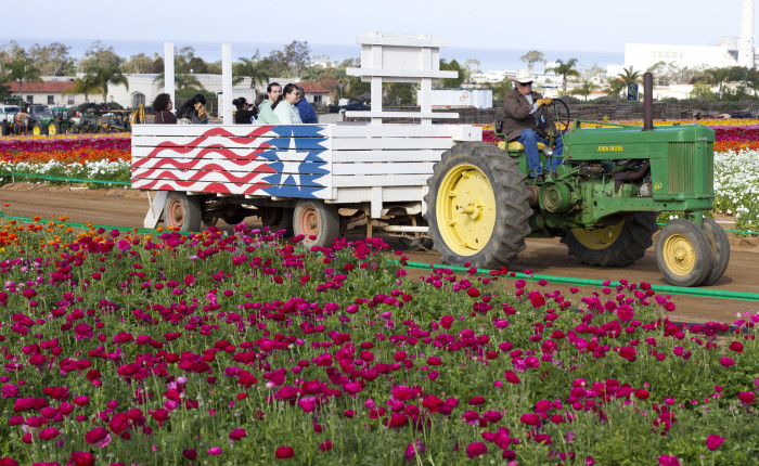 9. The flower fields in Carlsbad are a sight to see when you need a little reminder of why it's so wonderful to live here.