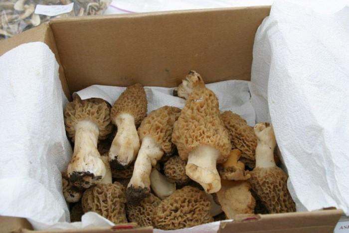 26th Annual Mountain Mushrooms.