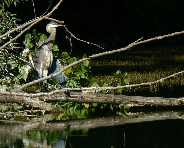 8. Ottawa-Magee Partnership Trail (Magee Marsh Wildlife Refuge)