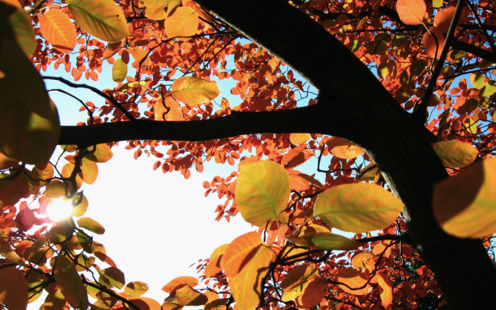 2. The glorious colors of the changing seasons