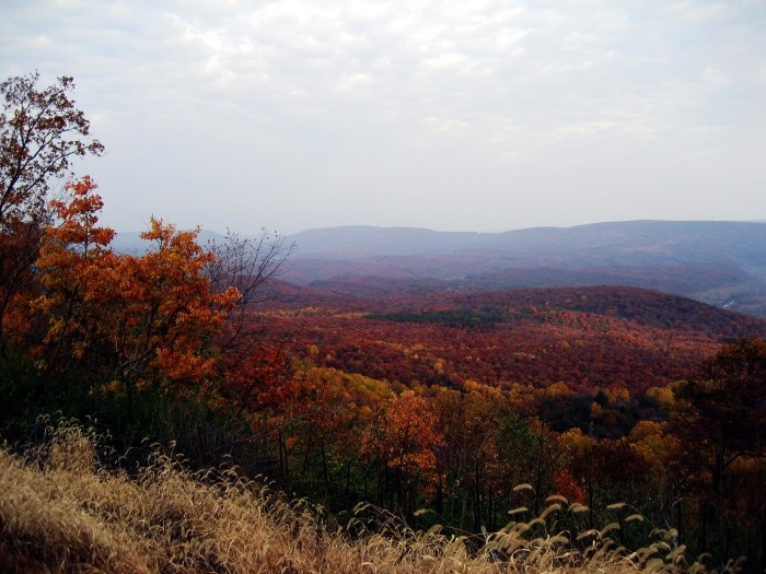 8. Green Ridge State Forest