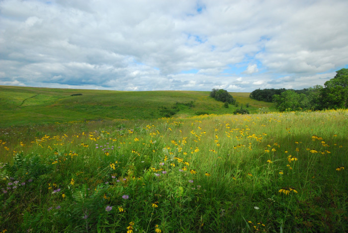 3. Some of the greenest prairies you'll ever see.