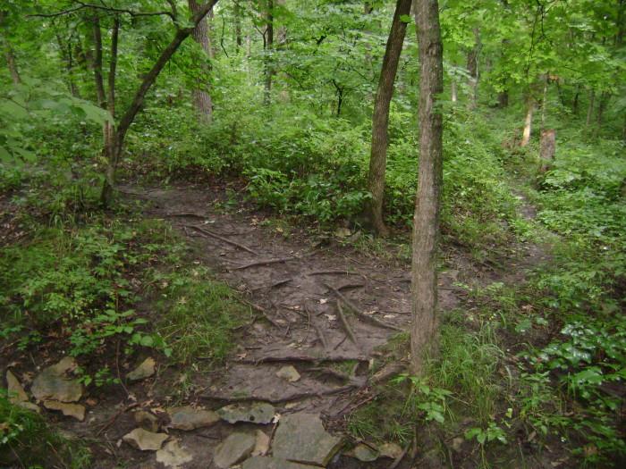 3.Redbud Trail at Crowder State Park